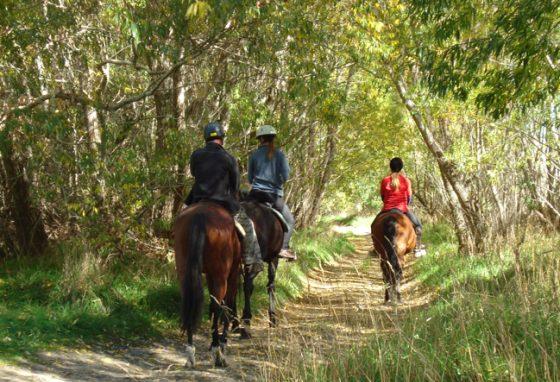 Waimak-Horse-treks